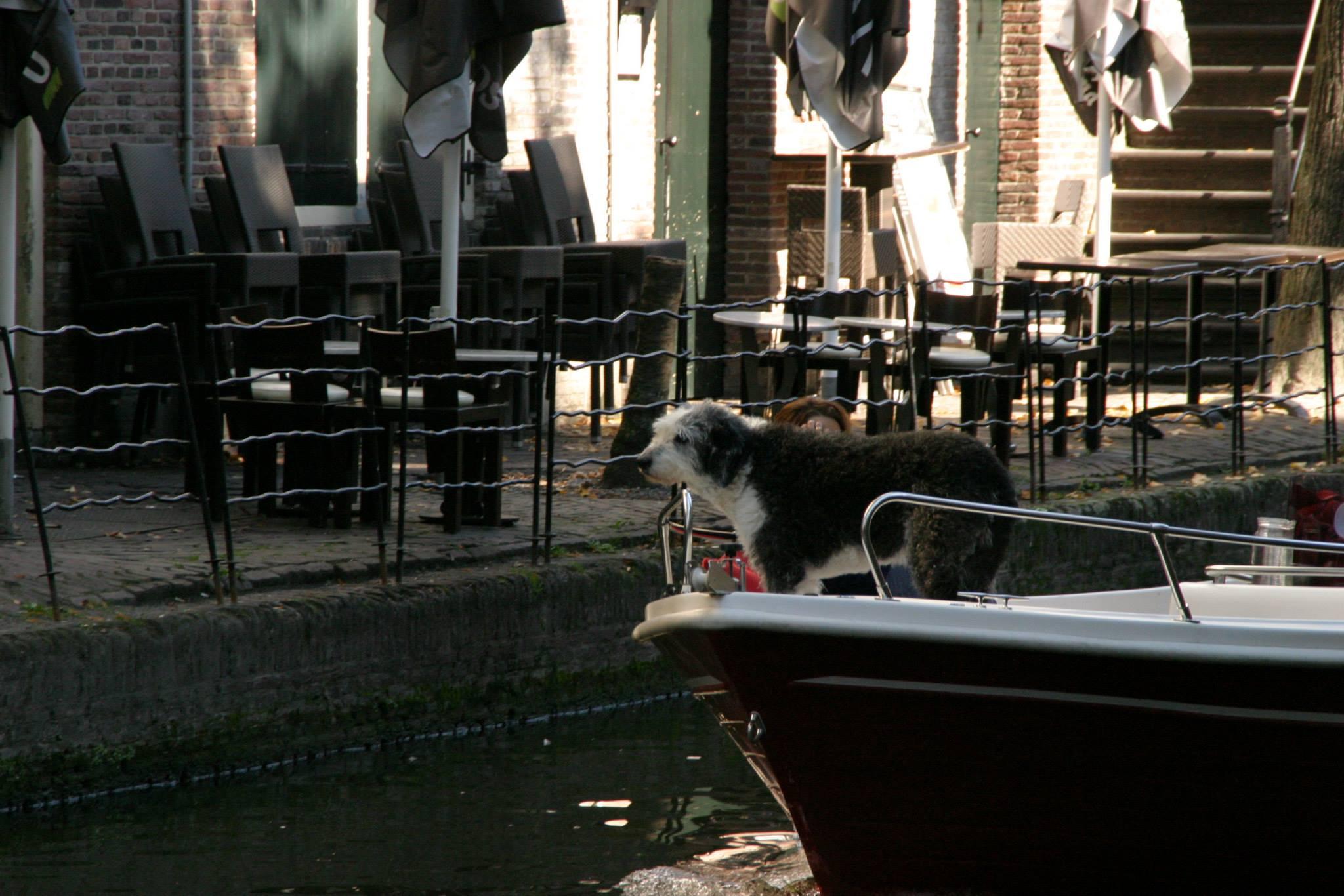 Dog on boatr